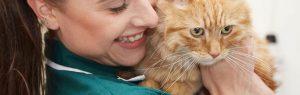 Cat friendly vet